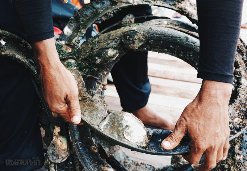 แกะหอยนางรมออกจากยาง