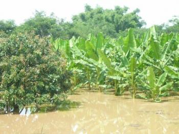 ปัญหาเกษตร ที่นีมีคำตอบ : ผลกระทบต่อความเป็นอยู่ในภาวะปรากฏการณ์เรือนกระจก