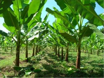 ปัญหาเกษตร ที่นีมีคำตอบ : ผักหมุนเวียน ทางรอดของเกษตรกรไทย