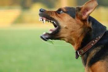 เตือนระวังโรคพิษสุนัขบ้า แนะวิธีสังเกตสัตว์ที่เป็นโรคนิสัยผิดปกติ