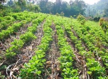 ปัญหาเกษตร ที่นีมีคำตอบ : การปลูกพืชบนพื้นที่ลาดชัน