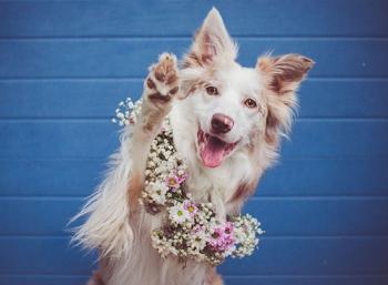 Cinni เจ้าหมาแสนสวย