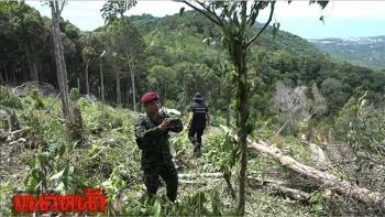ป่าไม้ลุยตรวจภูเขาเกาะสมุย พบชาวบ้านบุกรุก-โค่นต้นไม้กว่า12ไร่
