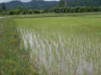 รายงานพิเศษ : พด.ร่วมบูรณาการ'แปลงใหญ่'สตูล เน้นปรับปรุงดิน-หนุนปัจจัยผลิตลดต้นทุน