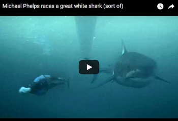 \'ไมเคิล เฟลบ์ส\'ว่ายน้ำแข่งฉลาม  ใครจะแพ้ชนะ?