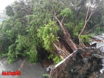 พายุงวงช้างถล่มมาบตาพุด ต้นไม้อายุ100ปีโค่น-หลังคาพังปลิวว่อน