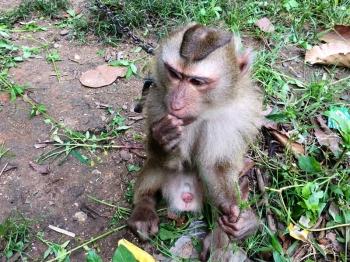 จ๋อจอมซน!วัย4ปี พลัดหลงเข้าหมู่บ้าน จนท.นำจับปล่อยคืนสู่ป่า