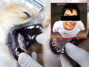 ตร.สุทธิสารออกหมายเรียกครั้งที่2 นศ.แพทย์วางยาสุนัข 26 ก.ย.นี้