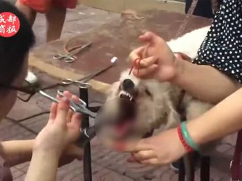 จวกยับ! ตัดเส้นเสียงสุนัข อยากเลี้ยงแต่รำคาญเสียงเห่า (ชมคลิป)