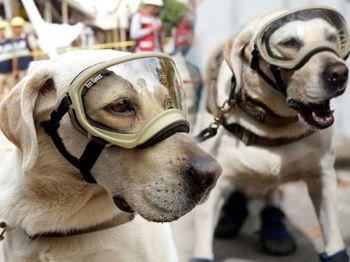 ทำเนียบเม็กซิโกชื่นชม\'เจ้าฟรีดา\' สุนัขกู้ภัยช่วยคนจาก\'ดินไหว\'หลายชีวิต (ชมคลิป)