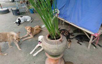 แฉปล่อยทิ้งแมว-หมาเกลื่อน8แสนตัว จี้รัฐตีทะเบียน-ทำหมัน