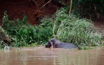 ทีมช่วยช้างโล่งใจช้างตั้งหัวได้แล้ว แบ็คโฮขุดเปิดทางรอลุ้นช้างเดินขึ้น