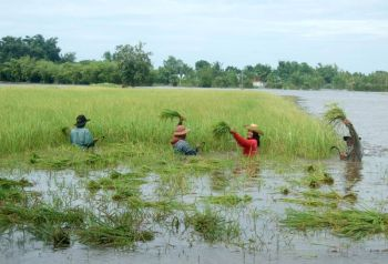 \'บิ๊กฉัตร\'เร่งเยียวยาเกษตรกรน้ำท่วม หลังครม.อนุมัติงบ