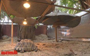 สวนสัตว์โคราชอาบน้ำอุ่นให้เต่า เปิดหลอดไฟคลายหนาวให้สัตว์เลือดเย็น