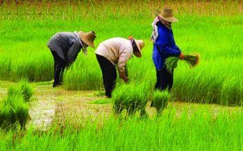 รบ.ลุยยกระดับภาคการเกษตร จ่อตั้งศูนย์ดิจิทัลในพื้นที่