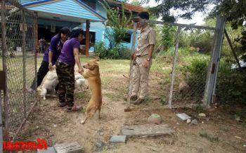 ชลบุรีตระเวนฉีดยาพิษสุนัขบ้า หลังหมาจรจัดไล่กัดสัตว์เลี้ยงในชุมชน