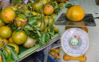 มันใหญ่มาก!'ส้มแก้ว'ของดีเมืองแม่กลอง แห่งเดียวในไทย
