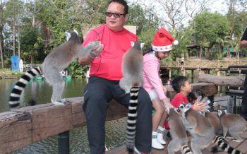 ปีใหม่นี้ไปล่องแพเที่ยวเกาะชมความน่ารักของลีเมอร์น้อยที่สวนสัตว์เขาเขียว