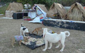สงสารหมาจรจัดถูกทิ้งที่บุรีรัมย์ ประสานปศุสัตว์ทำหมัน-หนาวจัดช็อกตายไป5ตัว