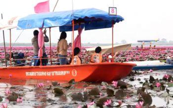 ล่องเรือปะทะลมหนาวยามเช้า ที่ทะเลบัวแดงหนองหานกุมภวาปี