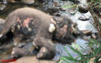 สลด! ช้างน้อยป่าภูหลวงลงมากินน้ำปีนขึ้นไม่ไหวหมดแรงตายคาห้วย (ชมคลิป)