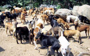 ศรีสะเกษจัดอบรมอาสาปศุสัตว์โรคพิษสุนัขบ้า