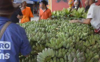 หนุ่มดีใจล้างหนี้ได้ ขนกล้วยน้ำว้า 5,559 หวี แก้บนพระเงินพระทองศักดิ์สิทธิ์