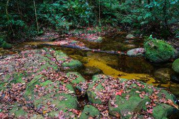 ป่าเมเปิลใจกลางภูหินร่องกล้า ชุดสุดท้ายทิ้งใบแดงทั่วพื้นดิน
