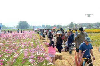 รายงานพิเศษ : โคราชผุดแลนด์มาร์คแห่งใหม่เพิ่มนักท่องเที่ยว  ชวนชมความงามของทุ่งดอกไม้100ไร่รับวาเลนไทน์