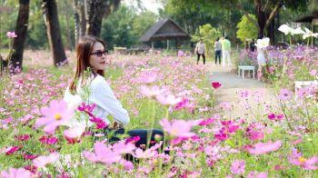 เริ่มแล้วเทศกาลชมช้าง @The Blooms Orchid Park  1ปีมีครั้งเดียว