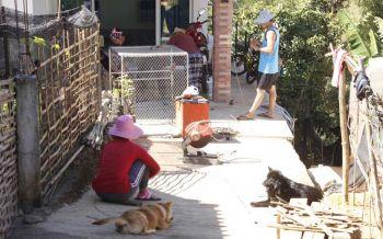 ฟ้องปศุสัตว์เชียงรายสังหารหมู่หมา-แมวยกหมู่บ้าน อ้างสกัดพิษสุนัขบ้า