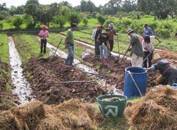 รักษ์เกษตร : การเตรียมดินสำหรับปลูกผักอินทรีย์