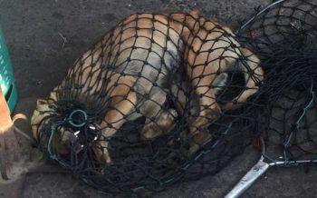 ผวา'หมาว้อ'.? สุนัขคลั่งถูกขโมยลูกไล่กัดคนทั่วเมือง จนท.จับตรวจ-ชิงตายลาโลก