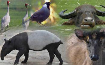 เปิดโผ 19 สัตว์ป่าสงวนในไทยอนาคตจะรอดเงื้อมมือมนุษย์หรือไม่