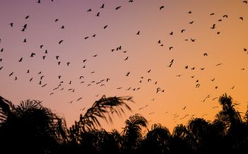 กระบี่ฮือฮา!นกกระยางอพยพย้ายถิ่นนับพันบินว่อนสร้างความประทับใจ