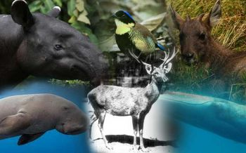 'สัตว์(สงวน)หายาก'และถิ่นที่อยู่  วอน'มนุษย์'ช่วยรักษาอย่าให้สูญพันธุ์