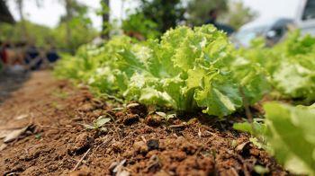 ปูพรมถ่ายทอดความรู้เกษตรอินทรีย์ ดันเกษตรกรเข้าระบบมาตรฐานทั่วปท.5พันราย