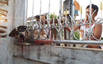 \'เจ้าโค้ก\'หมาจอมซ่า มุดรั้วบ้านคู่อริ หัวติดแหง็กดึงไม่ออก ร้อนถึงพี่กู้ภัยต้องมาช่วย
