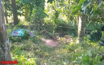 ซ้ำรอย!\'ช้างป่า\'เหยียบชาวบ้านยะลาดับสยองข้างขนำในสวนยาง