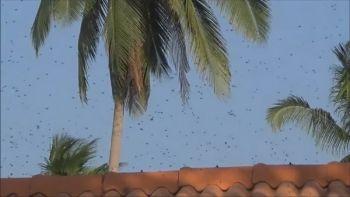 คอหวยเมืองคอนฮือฮา! ผึ้งฝูงใหญ่บินวนหน้าบ้าน-เก๋งป้ายแดง แห่ตีเลขเด็ด