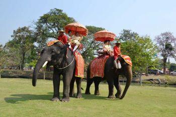 หวานล้นกรุงเก่า!ขี่ช้างจดทะเบียนสมรส ฉลองวาเลนไทน์กลางเมืองมรดกโลก (ประมวลภาพ)