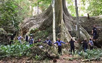 ใหญ่มาก! พบต้นมันช้างอายุกว่า 100 ปี รอบโค้นใหญ่ขนาด 60 คนโอบ