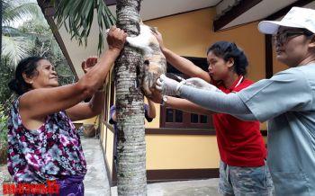 ปศุสัตว์บ้านค่ายเร่งฉีดวัคซีนหมา-แมวทั้งหมู่บ้าน หลังพบซากวัวตายเพราะพิษสุนัขบ้า