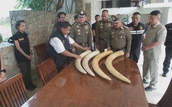 ปทส.จี้'เปรมชัย'แจงที่มางาช้าง ส่อผิดถ้าไม่ใช่ช้างเลี้ยง