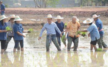 คณะชาวญี่ปุ่นศึกษาดูงานเกษตรที่โคราช ร่วมไถ-ดำนาทุลักทุเล