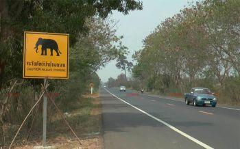 พบช้างป่า3ตัวออกหากินทำลายพืชไร่ เตรียมผลักดันเข้าป่า-วอนชาวบ้านอย่าทำร้าย