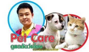 pet care : แมว : จำเลยโรคท็อกโซพลาสโมซิส ? ตอนที่ 1
