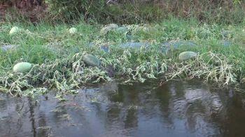 น้ำท่วมแปลงแตงโมเกษตรกร\'สงขลา\' เสียหายนับหมื่นบาท-หน่วยงานเร่งเยียวยา