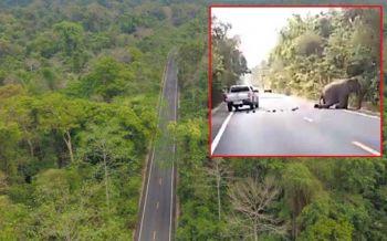 บิ๊กป้อมเผยสร้างเส้นใหม่แล้ว จ่อปิดถนน'เขาอ่างฤาไน'หลังช้างป่าถูกรถชน