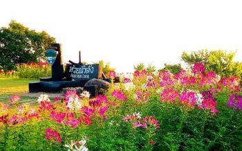 \'อุทยานห้วยน้ำดัง\'ยังหนาวเย็น-เช้ามีทะเลหมอก ดอกไม้บานสะพรั่งสวยงาม